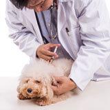 Veterinary technologists